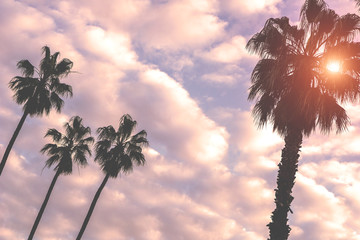 Beautiful tall palm trees with a cloudy sky and the sun in the background - Warm filter