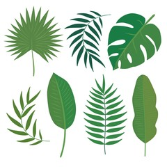 Vector set of tropical leaves. Palm leaf, banana leaf. Jungle trees.Botanical (floral) illustration. Flat design