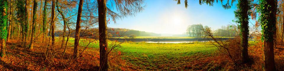 Wald im Herbst mit Blick auf eine Landschaft mit grünen Wiesen