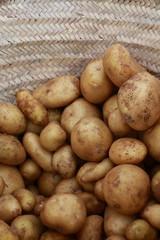 Ecological potato