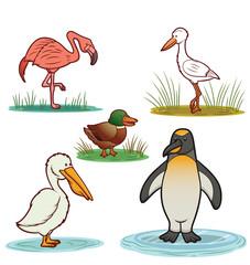 Water Birds Cartoon