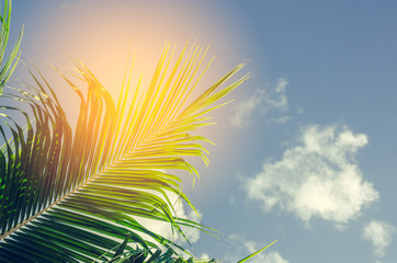 Copy space of green nature palm leaf branch on blue sky background.