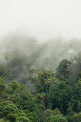 tropical rainforest in  Hala-Bala Wildlife Sanctuary of Thailand