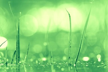bokeh blurred background green grass leaves