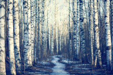 March landscape birch forest background Wall mural