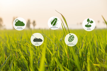 Precision Agriculture and Agritech concept. Precision agriculture network icons on rice field background. Wall mural