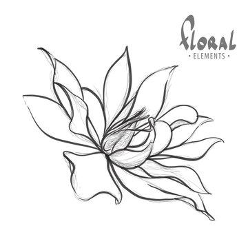 Delicate lotus drawn pencil