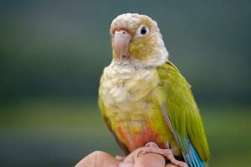 Close-uo of a Macaw parrot in the wilderness