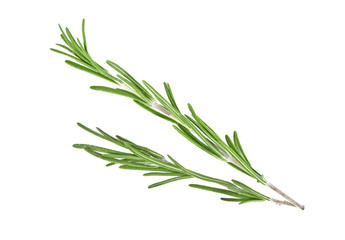 Rosemary on a white background, closeup
