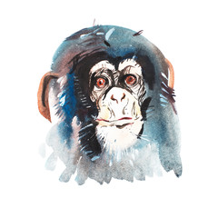 Watercolor portrait of grey furry monkey. Aquarelle drawing 2016 symbol