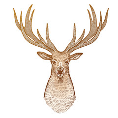 Deer head from the front.