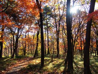 Forest in Meiji Temple