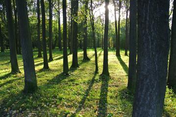 Green Park. Rays of  sun through trees.