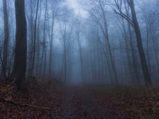 Unterwegs an einem nebligen Dezember Morgen