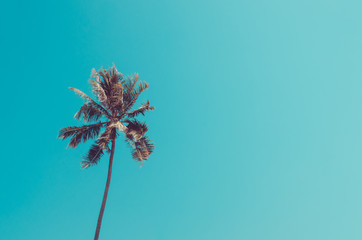Copy space of palm tree on blue sky