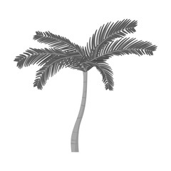 Mexican fan palm icon in monochrome style isolated on white background. Mexico country symbol stock vector illustration.
