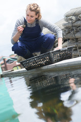 woman catched oysters from fishfarm