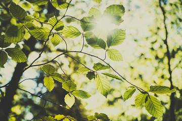 Beautiful summer in the forest. Tree with green leaves against the sunny sky. Natural background. Beauty world