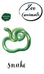 Green coiled snake