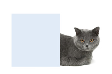cat with yellow eyes lying behind a banner on a white background