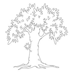 Tree coloring book. Deciduous tree vector isolated