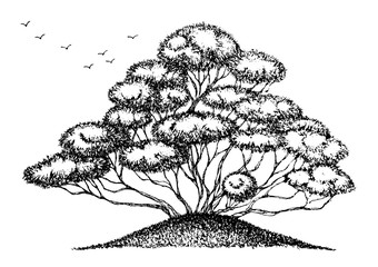 bonsai tree doodle style sketch drawing, hand drawn, vector design