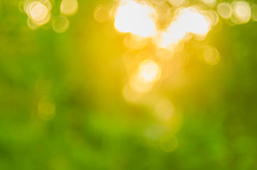 Copy space of nature green bokeh sun light flare and blur leaf abstract texture background.
