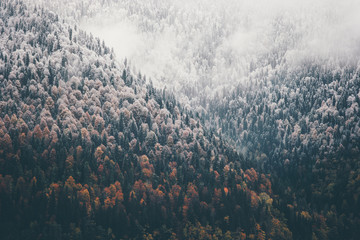 Mglisty jesień las iglasty krajobraz widok z lotu ptaka tło Podróż spokojny widok sceniczny - 131012951