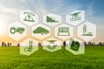 Precision Agriculture and Agritech concept. Precision agriculture network icons on rice field. Wall mural
