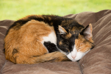 Old calico cat sleeping peacefully in a soft bed in front of a window