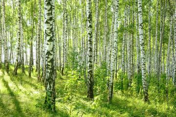 Deurstickers summer in sunny birch forest