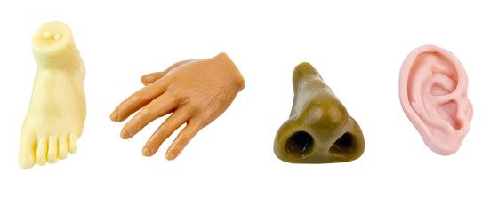 Rubber body parts: foot, hand,nose, and ear. Isolated.