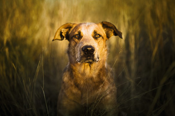 Portrait of a dog in a feild