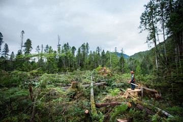 Logger at work standing in a clearing of trees
