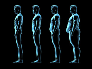 Four Male Body Types
