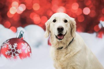 Weihnachtlicher Hund