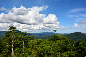 Beautiful primary rainforest scenery in Danum Valley, Sabah Borneo, Malaysia.
