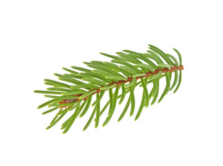 Closeup of Fir tree branch isolated on white background