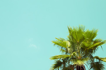 Copy space of palm tree on blue sky background.