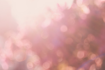 Blur nature pink flower flora with bokeh sun light abstract background.