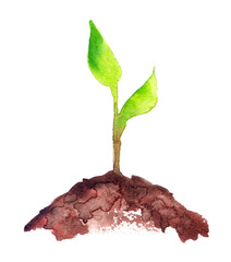 Fresh green sapling with two green leaves growing out of pile of brown earth painted in watercolor on clean white background