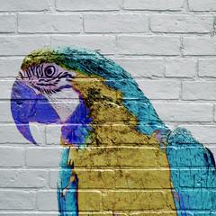 Art urbain, Ara bleu