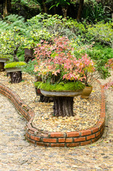 Beautiful Bonsai tree in outdoor garden