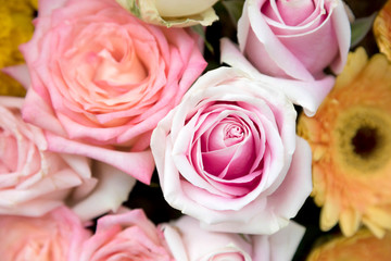 Colorful variety pink roses flower bouquet as a floral background with soft focus and copy space.