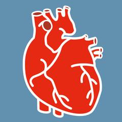 Coeur - Anatomie - Organe - cardiologie - médecine