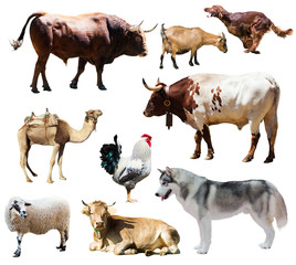 dogs and other farm animals. Isolated over white