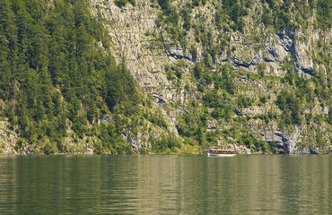 Sheep on the lake of Königsee, Berchtesgaden National Park, Germany
