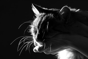 silhouette of a cat laid the head on the woman's hand