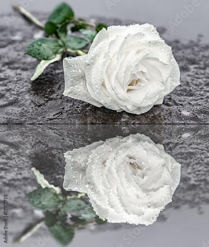 eine auf einem grabstein niedergelegte wei e rose auf gefrorenem untergrund zum ausdruck der. Black Bedroom Furniture Sets. Home Design Ideas