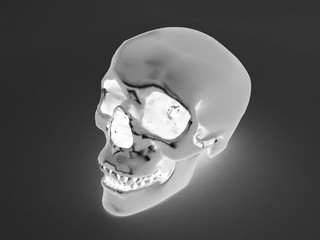 3D render of a x-ray human scull
